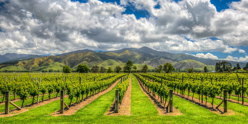 Marlborough Vineyard